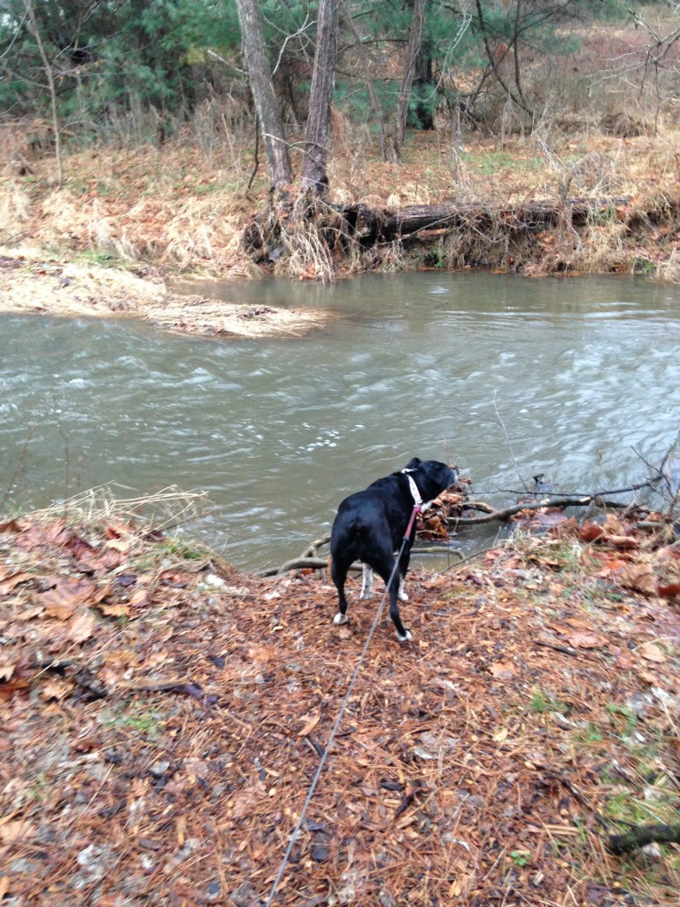 Our Canine Correspondent is on the bank of a precarious river that she could fall into and get wet. We recommend you don't get this close to a river. Only reporters should.